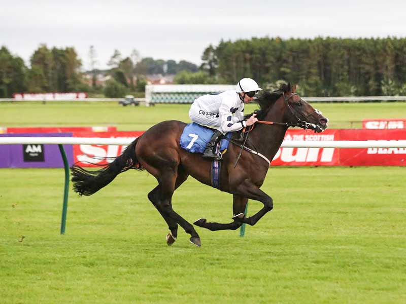 Lamloon winning Ayr